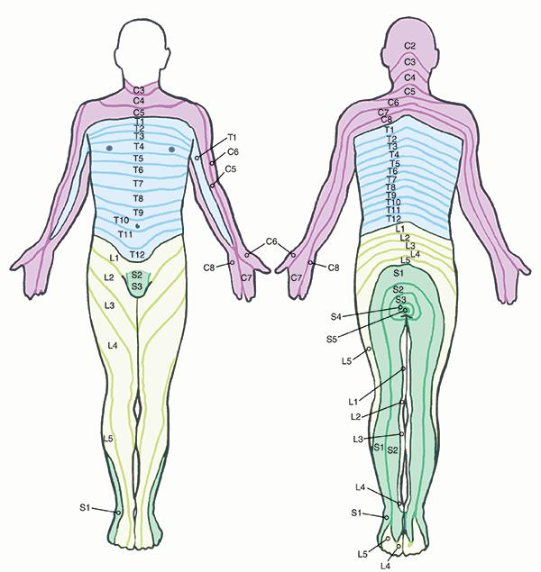 l1 l2 l3 wiring diagram